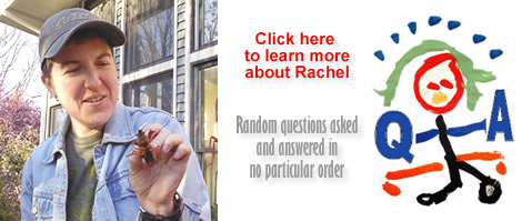 Click here to view the Q & A session with artist Rachel Dickson!