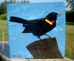 Securing the Perimeter (red-winged black bird) by Artist Rachel Dickson